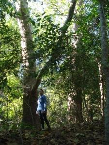 Forest around Terry Hershey Park